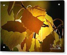 Autumn Leaves Acrylic Print by Sharon Talson