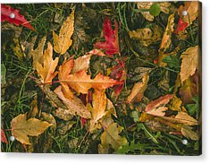 Autumn Leaves Acrylic Print by Thubakabra