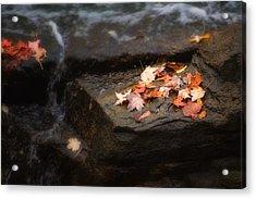 Autumn Leaves Acrylic Print by Tom Mc Nemar