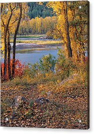 Autumn Acrylic Print by Leland D Howard