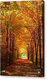 Autumn Light And Leaf Painting Acrylic Print