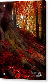 Autumn Light Acrylic Print