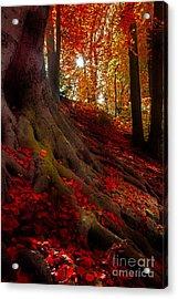 Autumn Light Acrylic Print by Hannes Cmarits