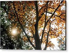 Autumn Light Acrylic Print by Jamie Pham