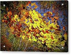 Autumn Light Acrylic Print by Tatsuya Atarashi