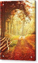 Autumn Lights Acrylic Print
