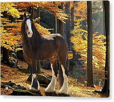 Autumn Majesty Acrylic Print