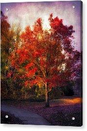 Autumn Maple 2 Acrylic Print by Jessica Jenney