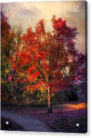Autumn Maple Acrylic Print by Jessica Jenney