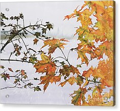 Autumn Maples Acrylic Print by Carolyn Doe