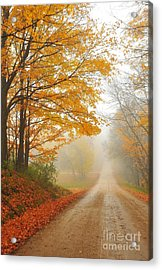 Autumn Maples In The Fog Acrylic Print by Terri Gostola