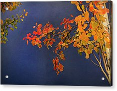 Acrylic Print featuring the photograph Autumn Matinee by Theresa Tahara