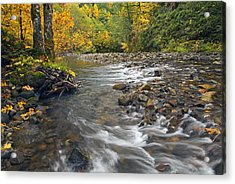 Autumn Meander Acrylic Print by Mike  Dawson