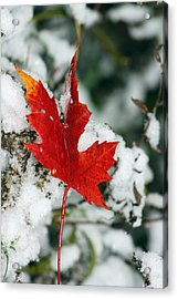 Autumn Meets Winter Acrylic Print