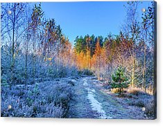 Acrylic Print featuring the photograph Autumn Meets Winter by Dmytro Korol