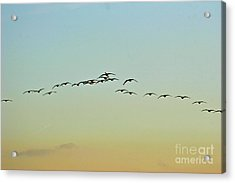 Autumn Migration Acrylic Print