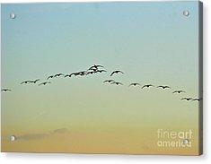Autumn Migration Acrylic Print