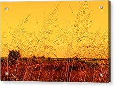 Acrylic Print featuring the photograph Autumn by Milena Ilieva