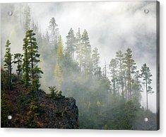 Autumn Mist Acrylic Print by Mike  Dawson