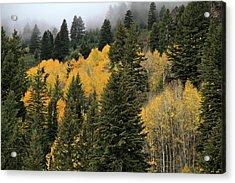 Autumn Mist, Owyhee Mountains Acrylic Print