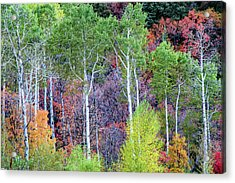 Autumn Mix Acrylic Print