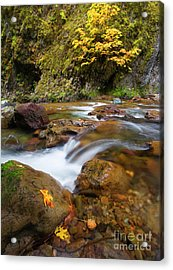 Acrylic Print featuring the photograph Autumn Moment by Mike Dawson