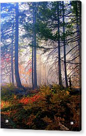 Autumn Morning Fire And Mist Acrylic Print by Diane Schuster