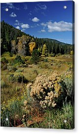 Autumn Morning In The Canyon Acrylic Print