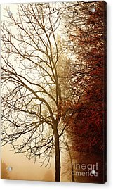 Acrylic Print featuring the photograph Autumn Morning by Stephanie Frey