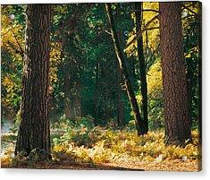 Autumn Morning Yosemite National Park Acrylic Print by Edward Mendes