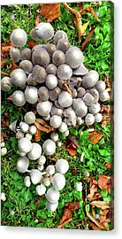 Autumn Mushrooms Acrylic Print