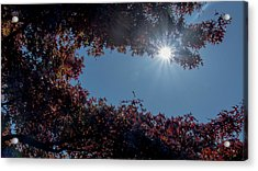 Autumn Oak And Sun Acrylic Print by Mick Anderson