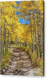 Autumn On Medano Pass Acrylic Print