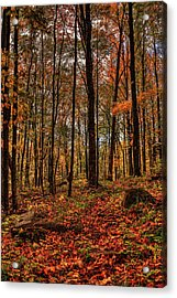 Autumn On The Ice Age Trail Acrylic Print