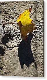 Autumn On The Rocks Acrylic Print by Ross Powell