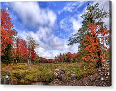Acrylic Print featuring the photograph Autumn On The Stream by David Patterson