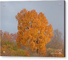 Autumn Over Prettyboy Acrylic Print