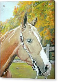 Autumn Palomino Acrylic Print by Crystal  Harris-Donnelly