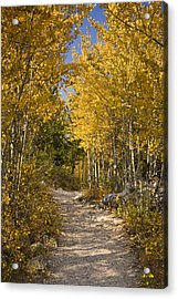 Autumn Path Acrylic Print by Andrew Soundarajan