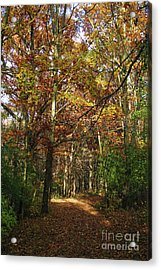 Autumn Path At St Croix Bluffs Acrylic Print