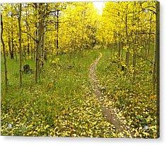 Autumn Path Acrylic Print