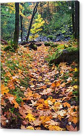 Autumn Path Acrylic Print by Mike  Dawson