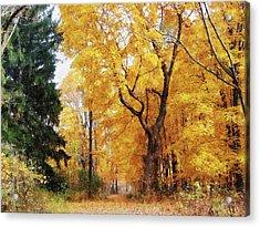 Autumn Path Acrylic Print by Susan Savad