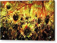Autumn Acrylic Print by Paul Drewry