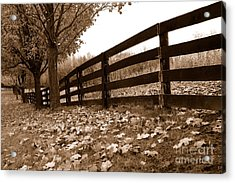 Autumn Perspective Acrylic Print by Joe  Ng