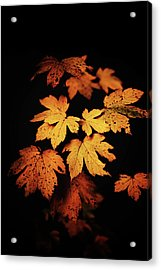 Autumn Photo Acrylic Print