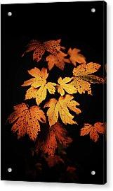 Autumn Photo Acrylic Print