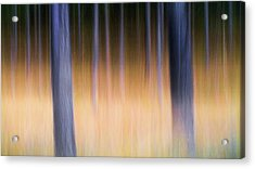 Acrylic Print featuring the photograph Autumn Pine Forest Abstract by Dirk Ercken