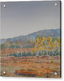 Autumn Poplars Acrylic Print by Debbie Homewood