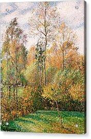 Autumn Poplars, Eragny Acrylic Print by Camille Pissarro